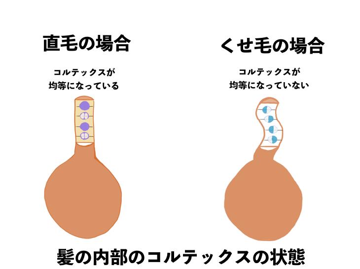 くせ毛と健康な髪の違い