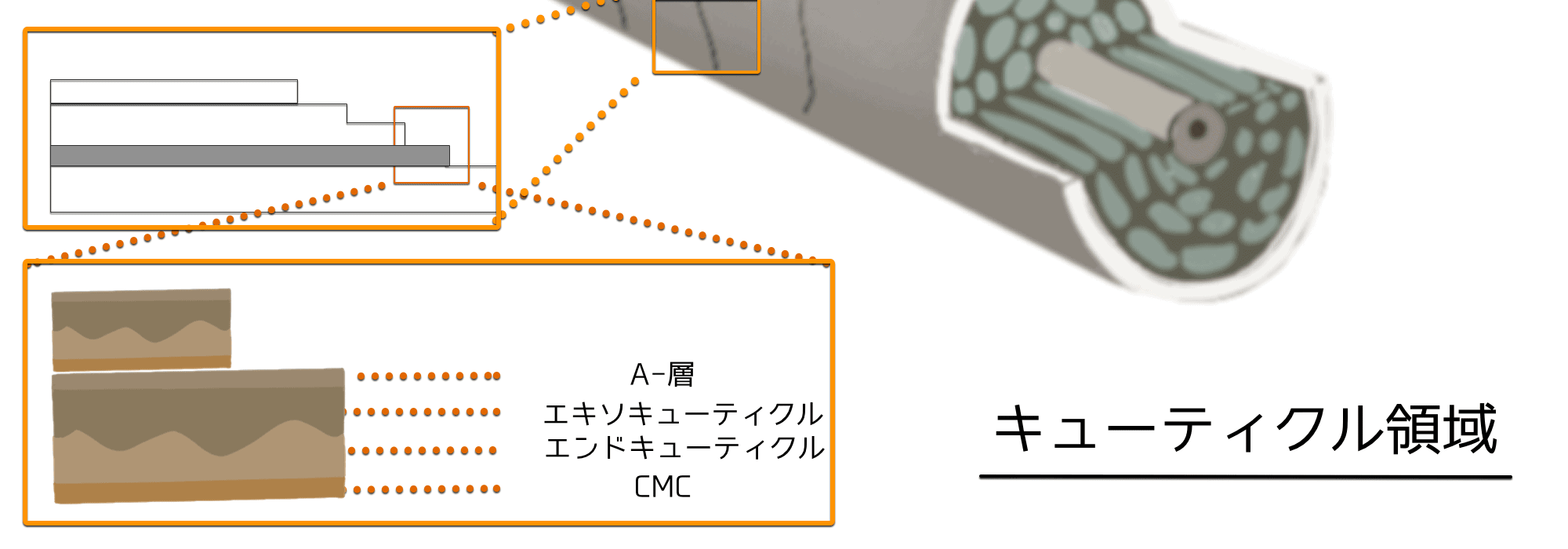 【市販品】美容師おすすめ「アホ毛を直す&抑える」ヘアマスク&ヘアパックTOP5!